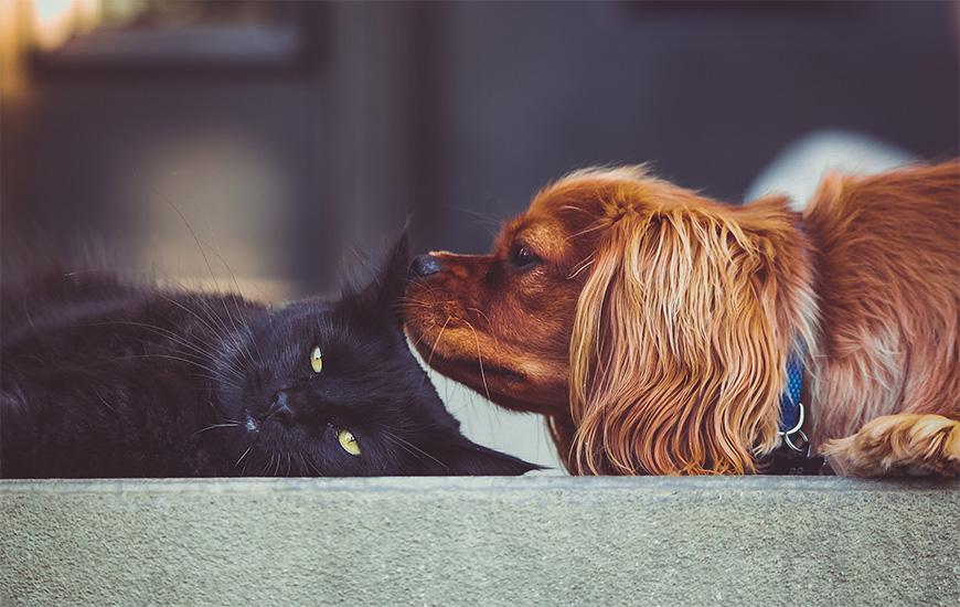 犬好き猫好きで分かる彼の心理とアプローチ方法